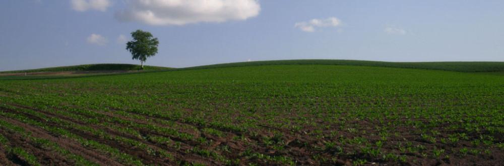 Soil improver voor de beste bodem for Soil improver